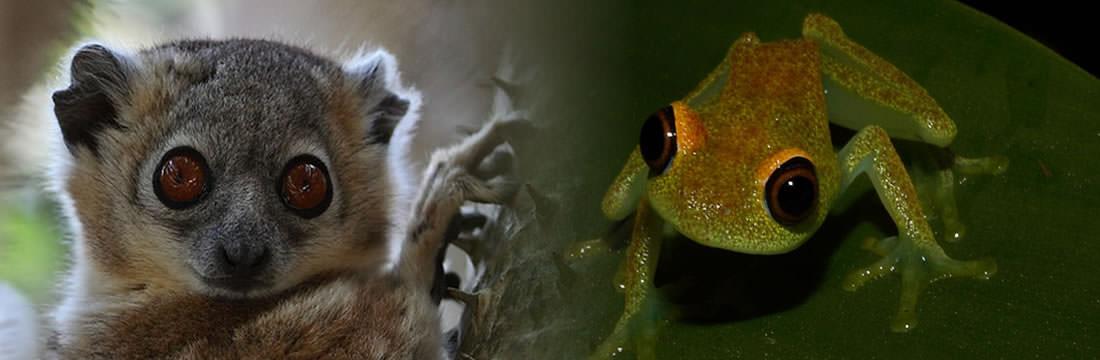 Madagascar wildlife tours in the eastern of Madagascar including Andasibe