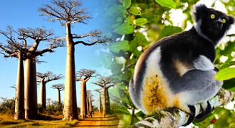 Madagascar Combo East-West Tours