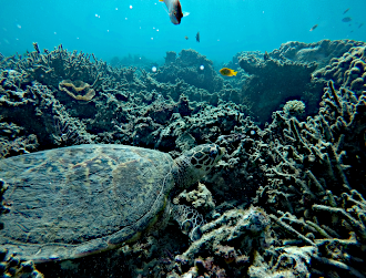 Diving and snorkeling in Madagascar