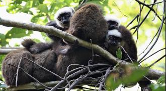 Tours in Masoala Nosy Be and Sainte Marie Madagascar