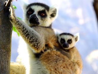 Madagascar Wildlife Tours vacations ideas