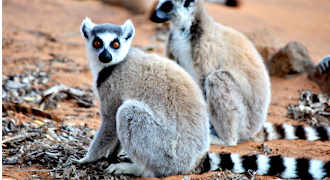 Overland Great South tours in Madagascar