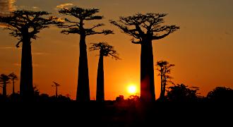 Westen Baobab Safari Tours and Tsingy de Bemaraha