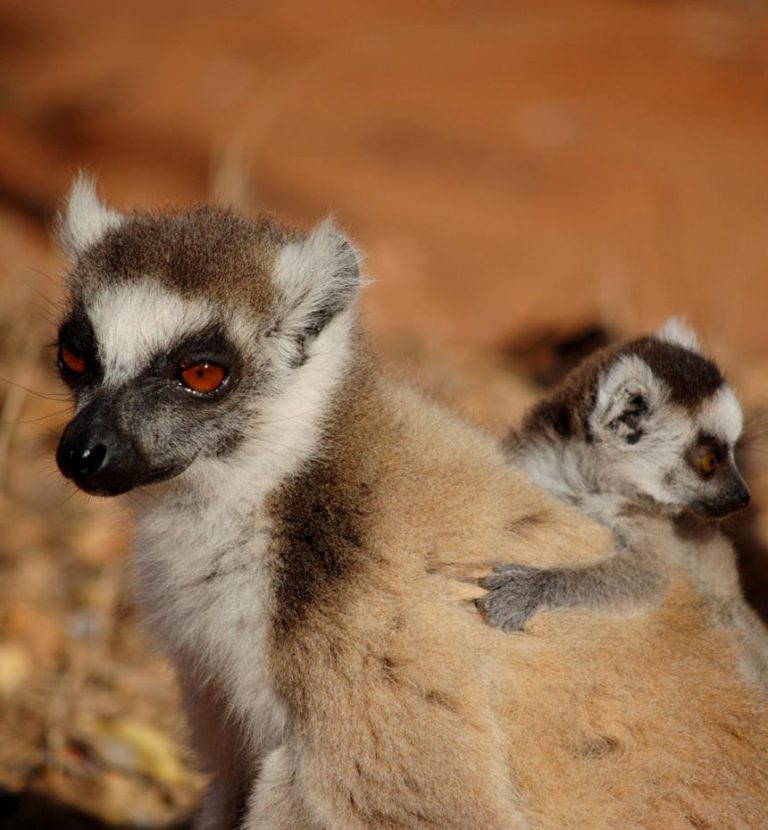 Madagascar discovery tours