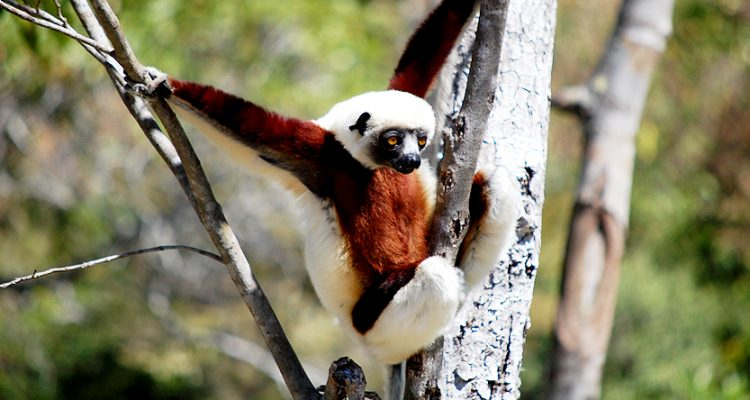 Wildlife Safari in Madagascar